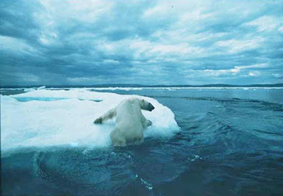 polar bear facing climate change