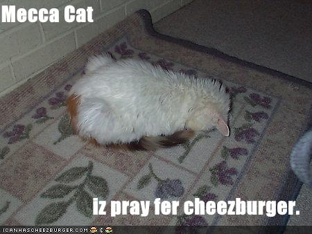Mecca Cat iz pray fer cheezburger