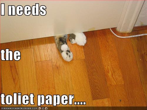 needs toilet paper