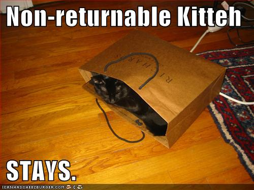 Non-returnable Kitteh STAYS
