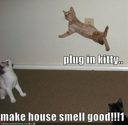 plug in kitty make house smell good