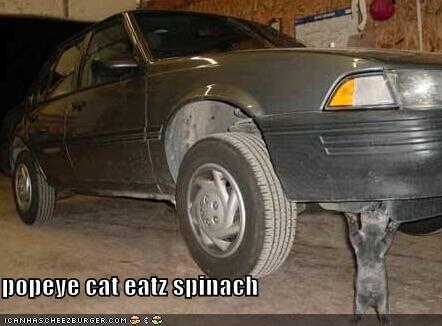 popeye cat eatz spinach