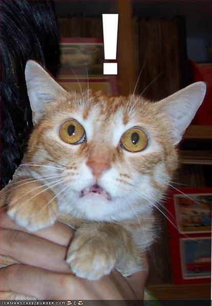 shockercat