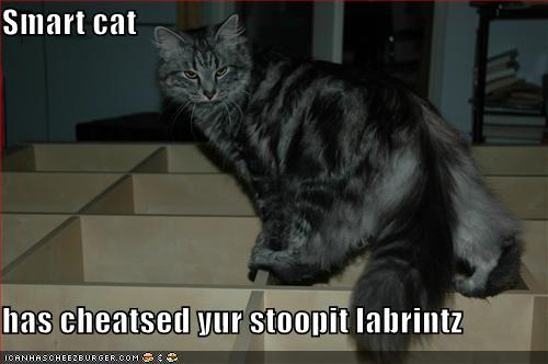 Smart cat has cheatsed yur stoopit labrintz