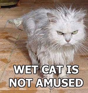 WET CAT IS NOT AMUSED