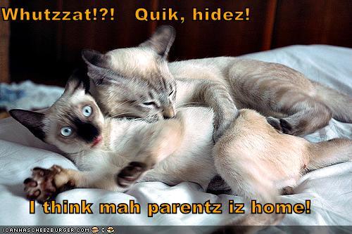 Whutzzat Quik hidez