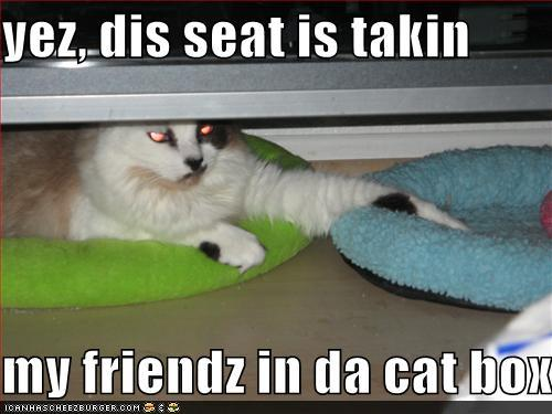 yez dis seat takin friendz cat box