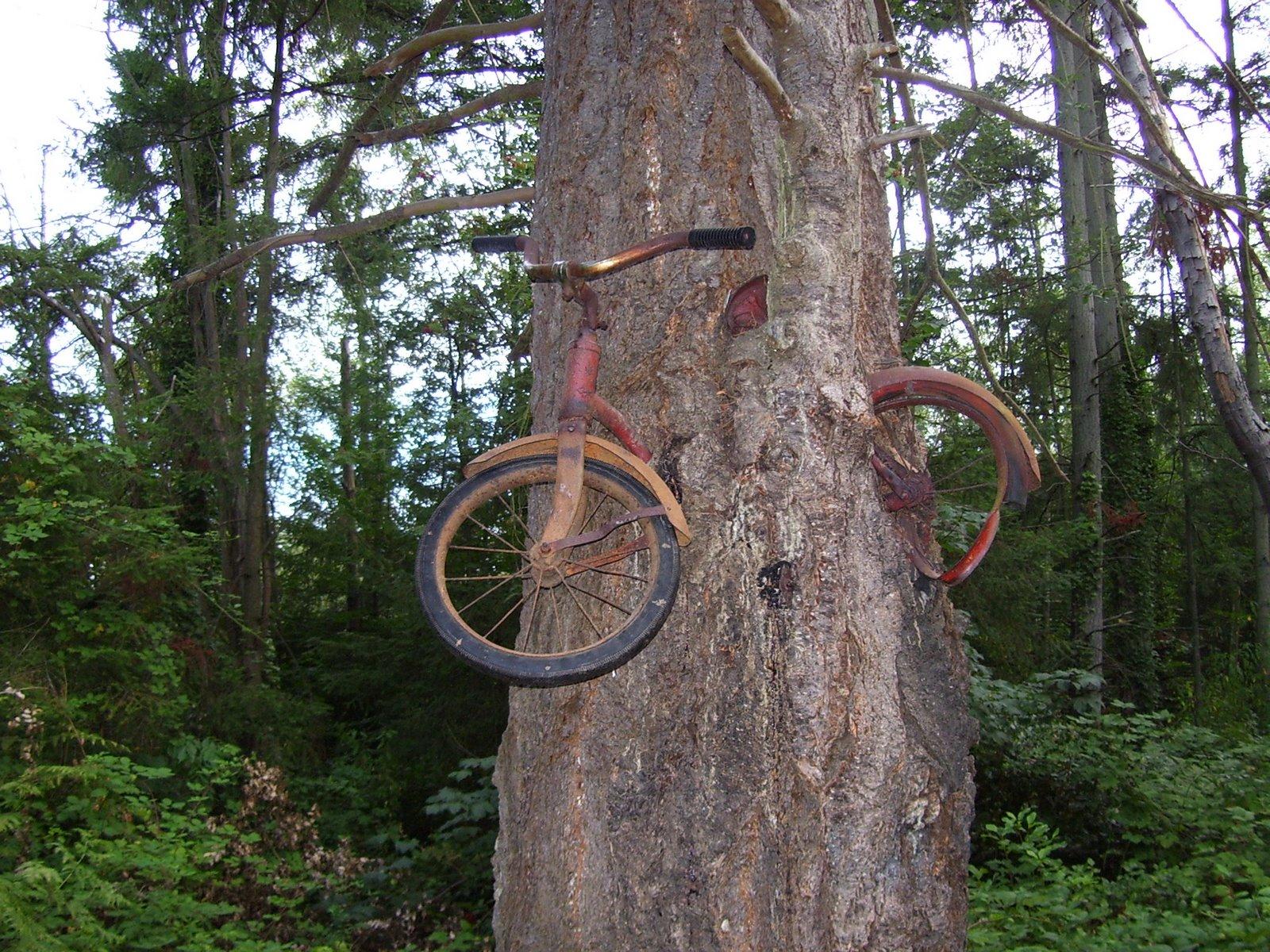 Привязал к дереву фото 7 фотография