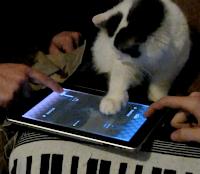 les chats et l'ipad