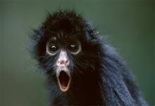 A Cute Little Spider Monkey