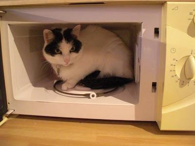 la belette de la marmotte chat au micro ondes. Black Bedroom Furniture Sets. Home Design Ideas