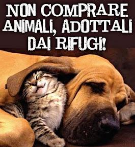 PER OGNI CUCCIOLO COMPRATO, UN ANIMALE MUORE SOLO E ABBANDONATO