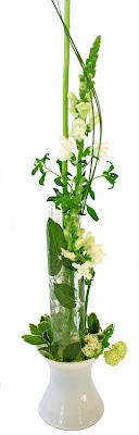 lejongap, viburnum och laminerade blad