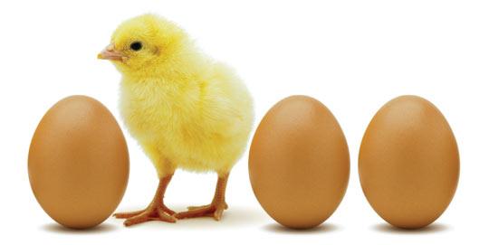 Por fin: El dilema de ¿quien fue primero el huevo o la gallina? fue ...
