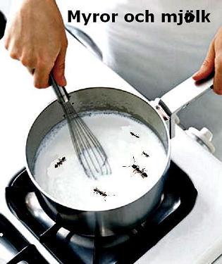 Myror och mjölk