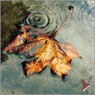 ����� ���� ������.... �������! fall.bmp