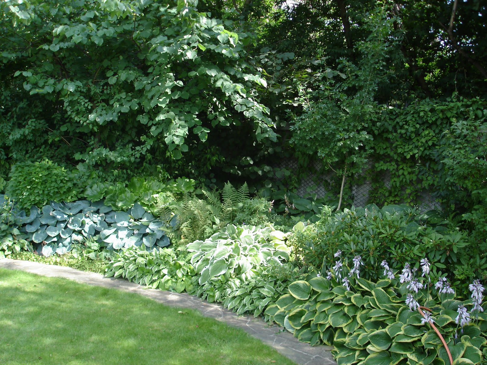Буддлея Давида из семян (фото) посадка и уход, Сайт о саде, даче и комнатных растениях