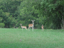 Limping Deer and the Twins