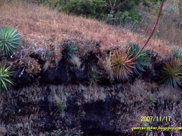 Vegetación en las orillas de una de las islas de la presa Corrinchis