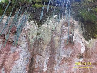 Muestra de la vegetación en la cercanias de la laguna de Juanacatlán