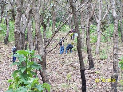 Bosque de encino en el Cerro Tomasillo