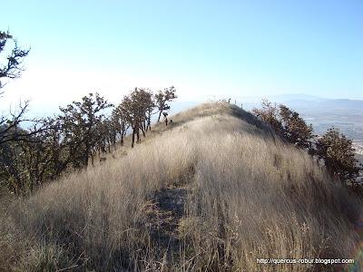 Llegando a la cima de un cerro adyacente al de la Mesa