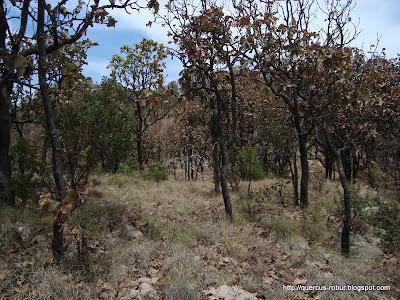 Vegetación en el Cerro los Bailadores