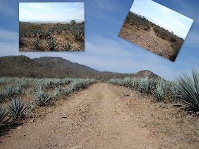 Vista de un extremo del Cerro Grande de Ameca