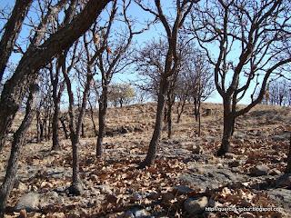 Cerro el Chicharron - encinos