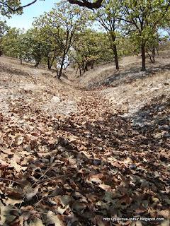 Arroyo de hojas de roble