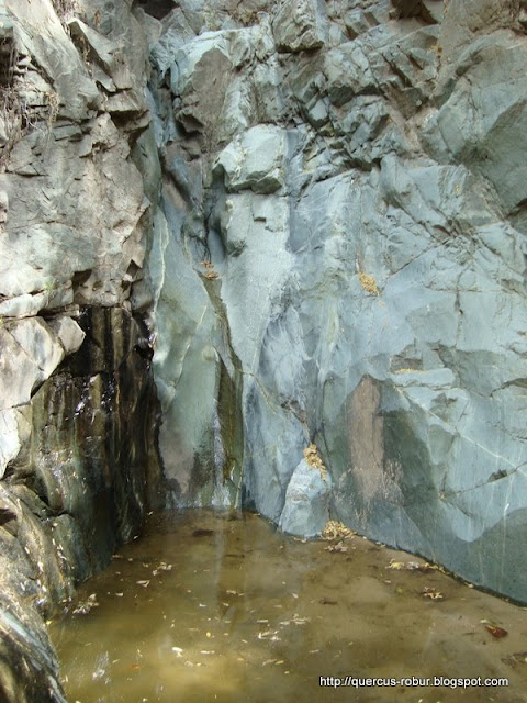 Cascada donde vi una iguana en una de las paredes