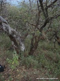 Vegetación en el Cerro de la Cruz