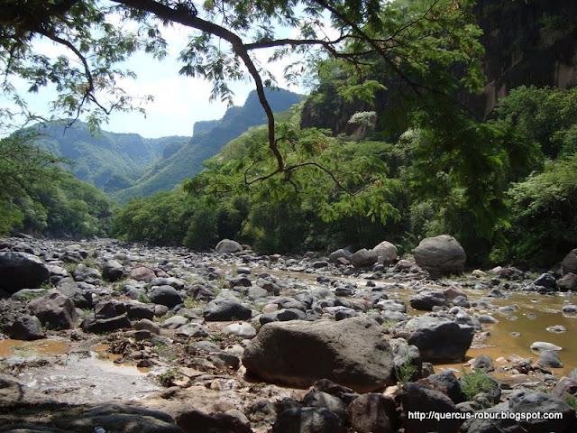 El Río Verde