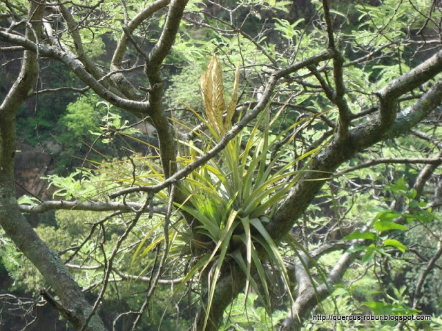Flora en los árboles
