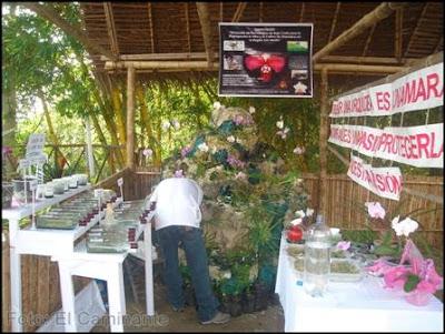 plantas en el xiv festival de la orquidea 2009 (moyobamba)