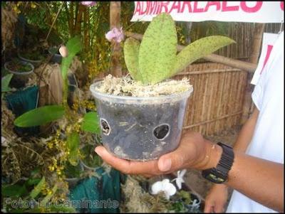 Cultivo de las Orquídeas: En
