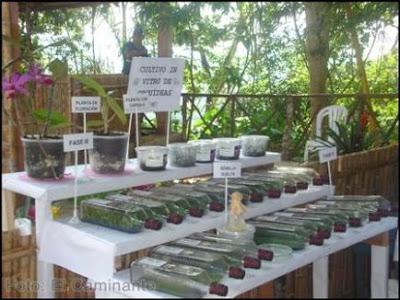 orquideas in vitro del inibico en el xiv festival de la orquidea 2009