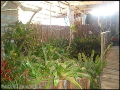 ambientes del xiv festival de la orquidea 2009, moyobamba
