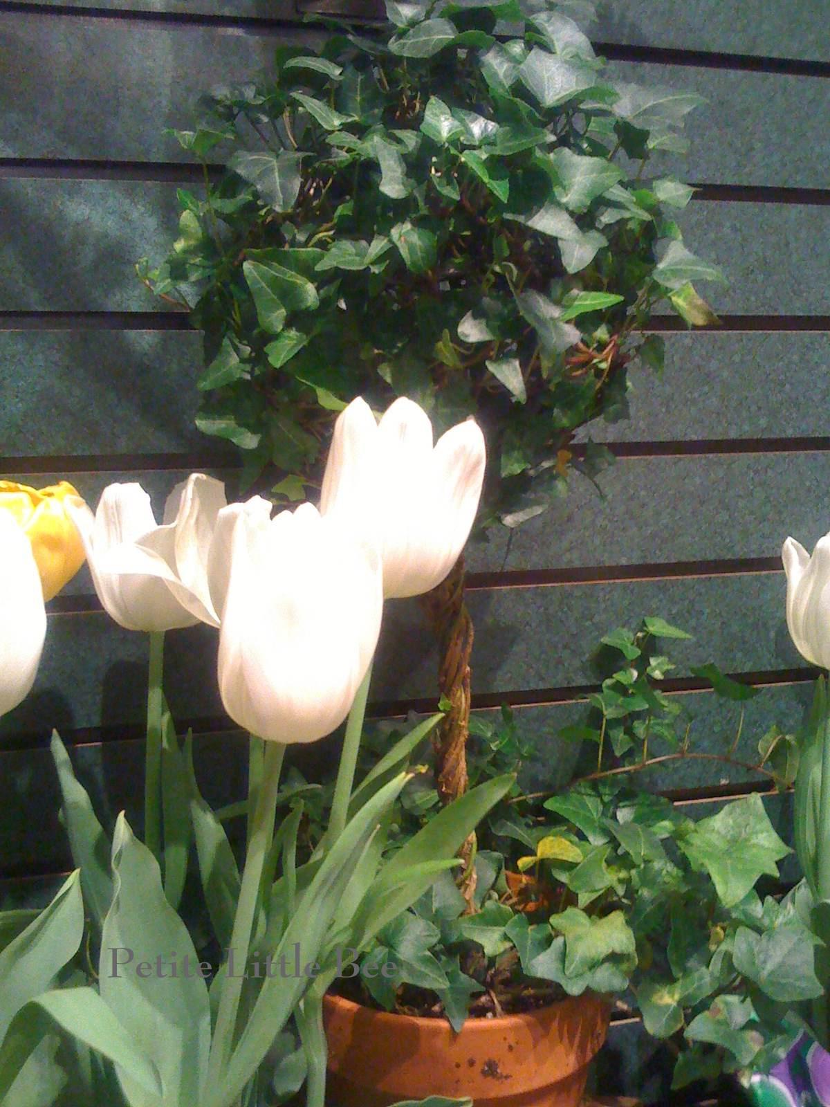 [flowers+5]