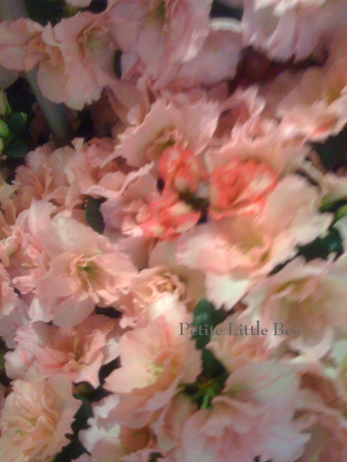 [flowers+2]