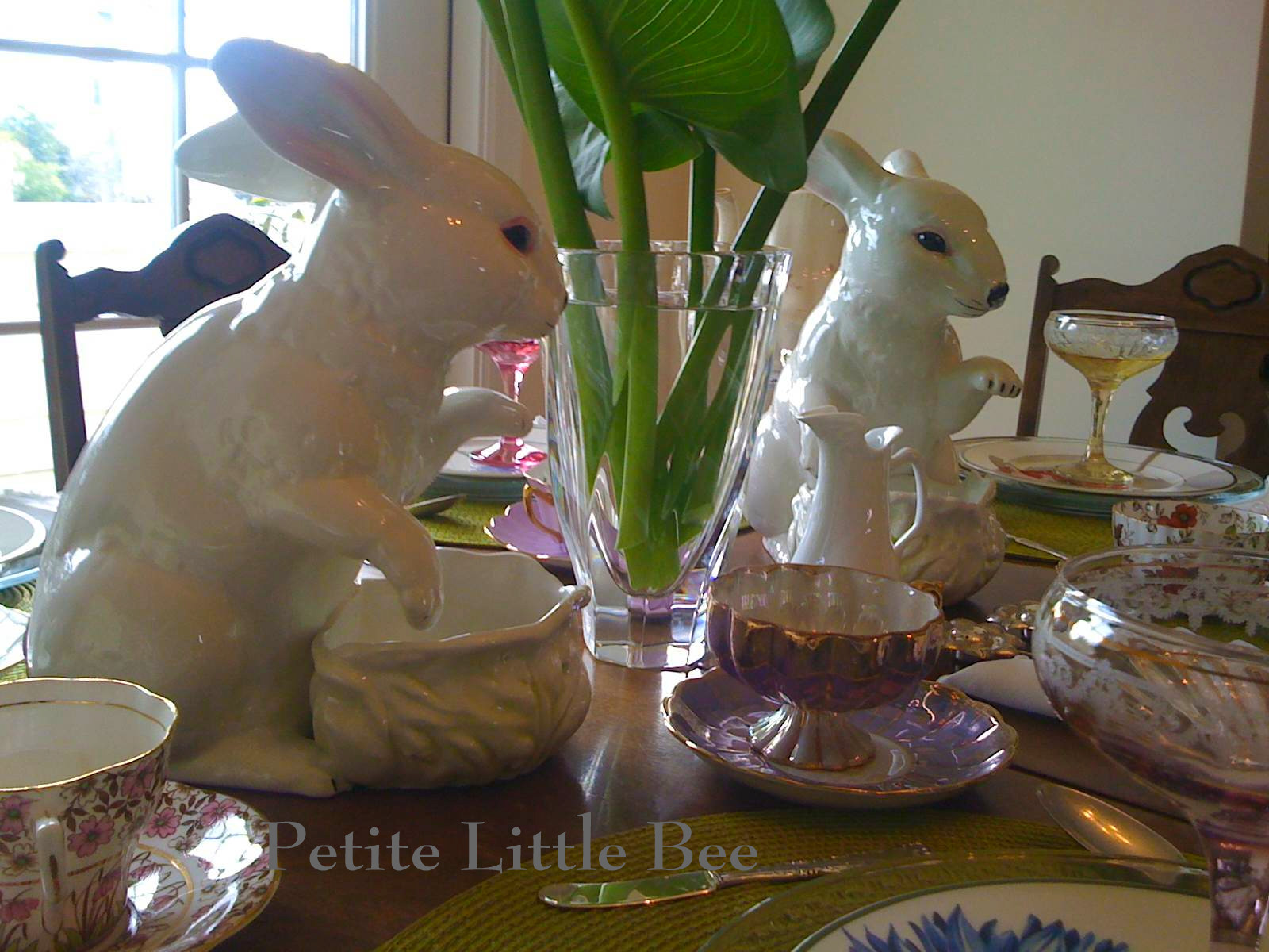 [rabbits+4]