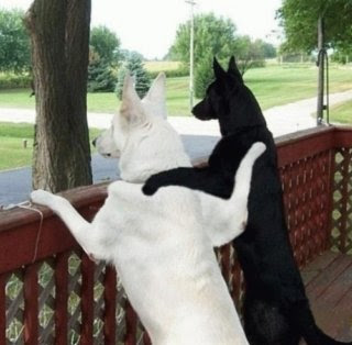 dogs and fun puppy humor Funny Dog Pictures Photobucket | funny dog