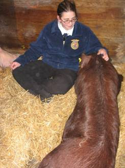 Photo of Amanda Forstater with Saul livestock