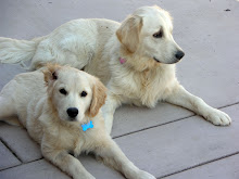 This blog has 2 dogs