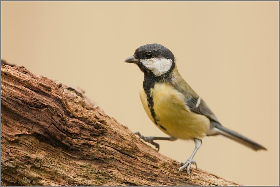 Kleine Vögel Im Garten : natur im garten v gel im garten ~ Lizthompson.info Haus und Dekorationen