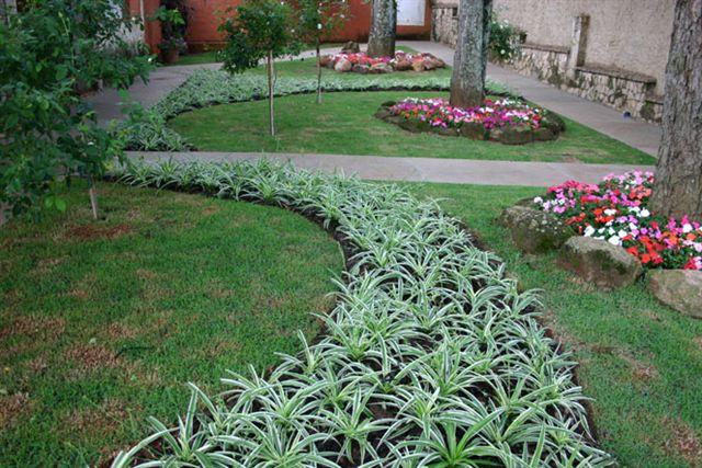 flores jardim sombra : flores jardim sombra:Flores & Jardins: Clorofito