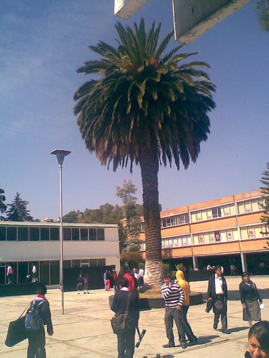 PALMERA DE LA NORMAL