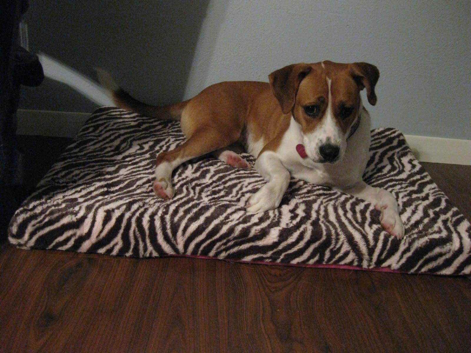 Semi Diy Dog Beds