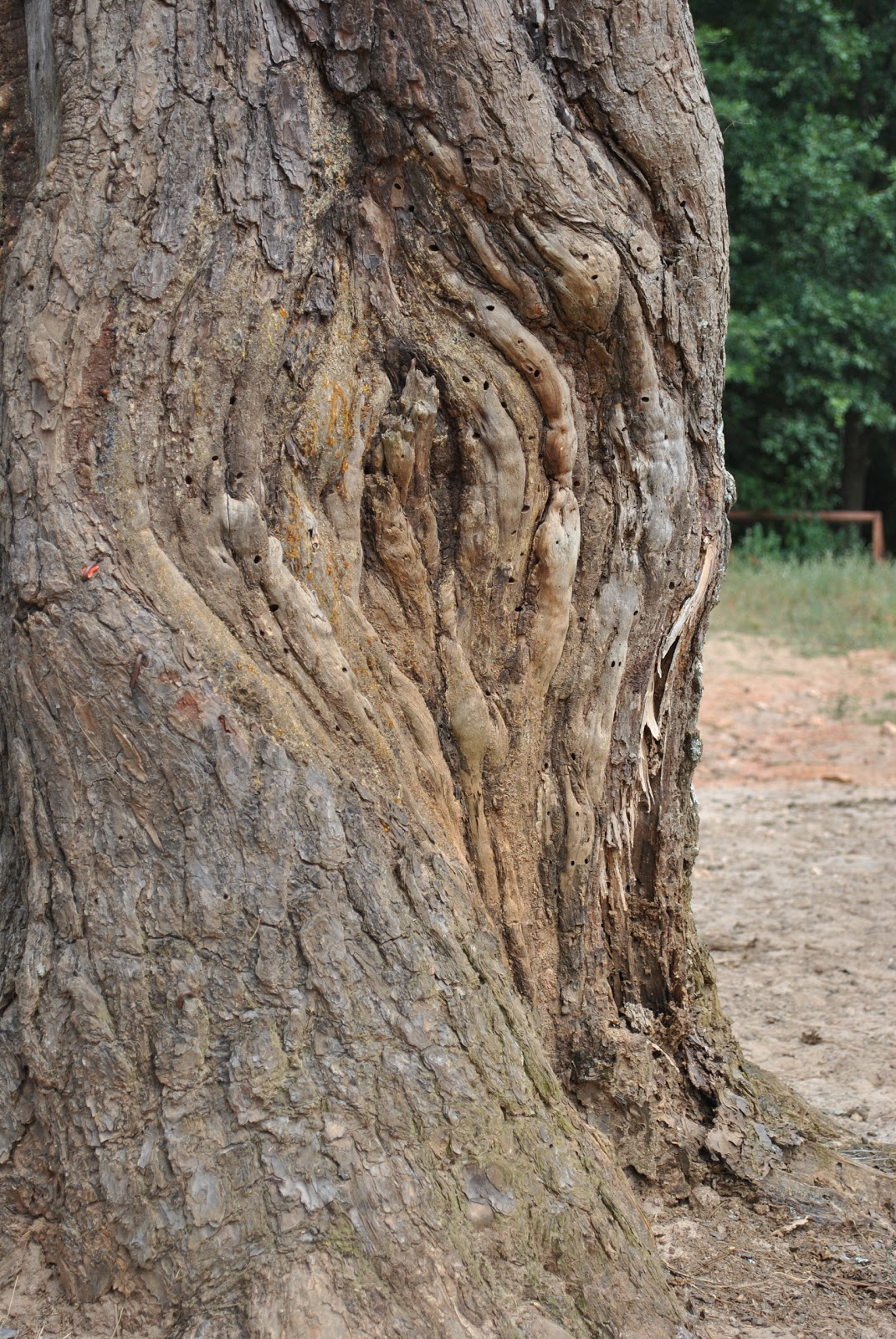 FREE TEXTURE SITE: Free Bark Texture