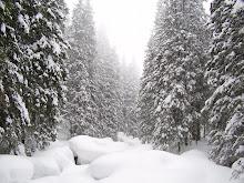 Slovakian Snow